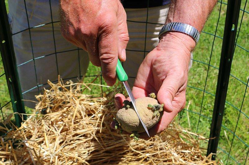 Новые способы выращивания картошки 81