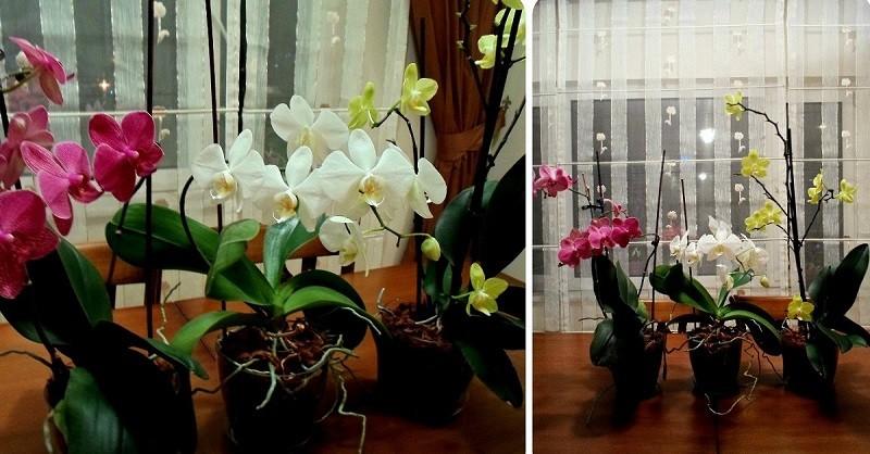 Как удобрить орхидею в домашних условиях