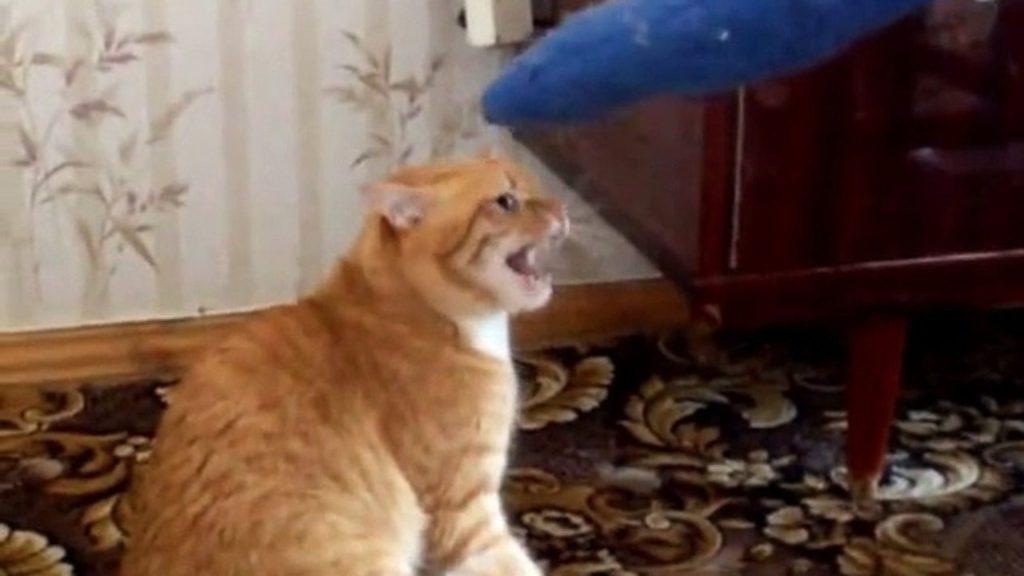 Боевой кот загнал обидчика на балкон, но на этом не успокоился. Капец тебе, парень!