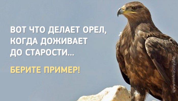 Когда орел доживает до старости, он делает удивительную вещь... До чего сильная птица!