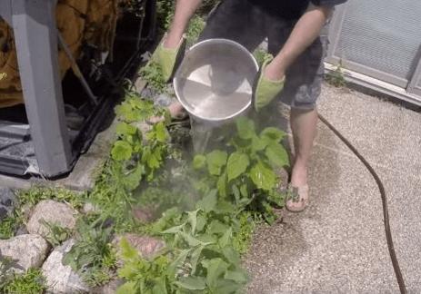 Как избавиться от сорняков дешево и эффективно. Записывайте советы от профессионального садовника!