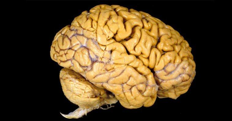 Эти 6 упражнений помогут прокачать твой мозг. Рецепты вечно молодого сознания