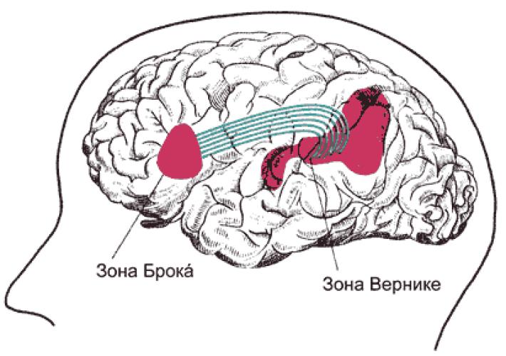 Развиваем и оптимизируем работу мозга: 17 очень полезных практик