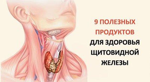 9 самых полезных продуктов для щитовидной железы. Употребляйте чаще и щитовидка скажет вам спасибо!