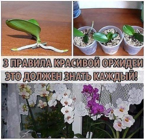 3 правила красивой орхидеи. это должен знать каждый