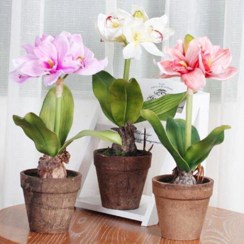 Чтобы цветы в доме цвели пышно и долго, воспользуйтесь этой маленькой хитростью!