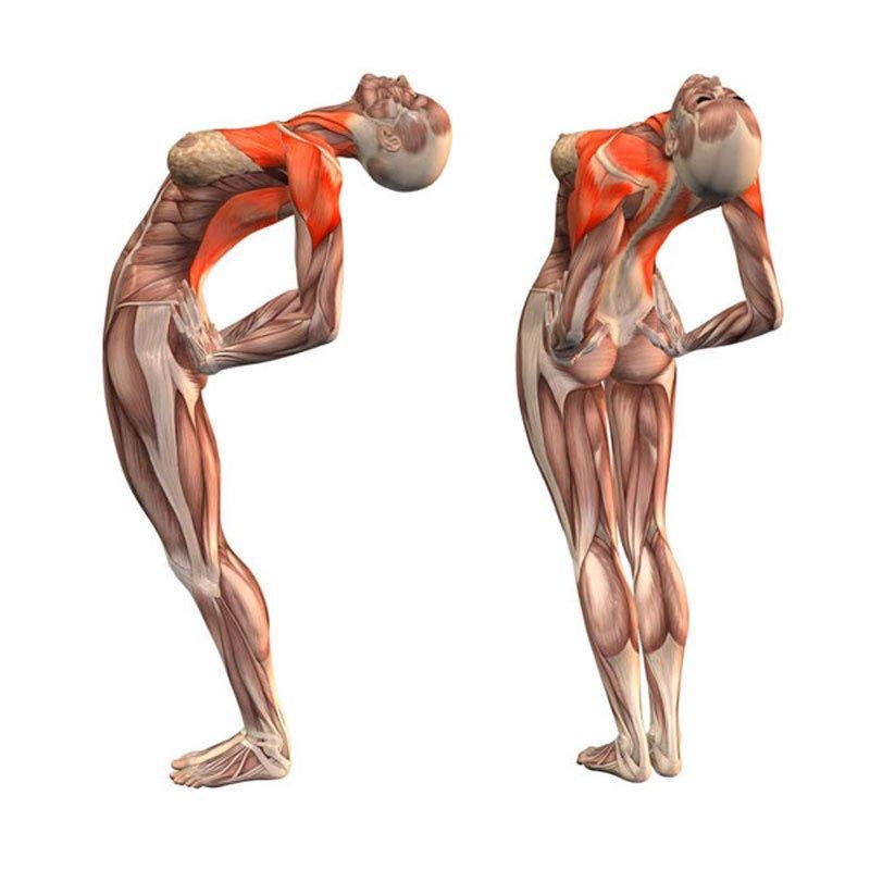 Эти упражнения улучшают кровоснабжение мозга, выпрямляют позвоночник, освобождают сосуды от зажимов