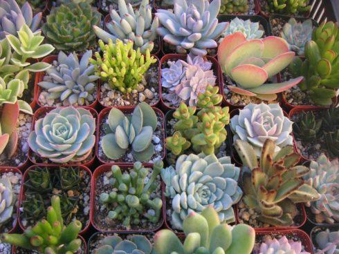 Зеленые экстремалы - 10 самых неубиваемых растений для вашего дома