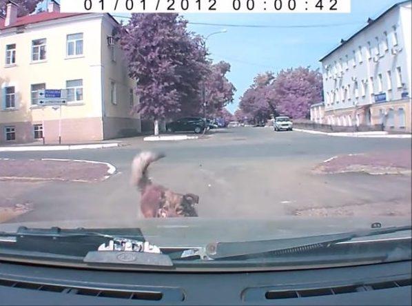 Собака изо всех сил предупреждала его об опасности. Мужчина проигнорировал и после с ним случилось ТАКОЕ!