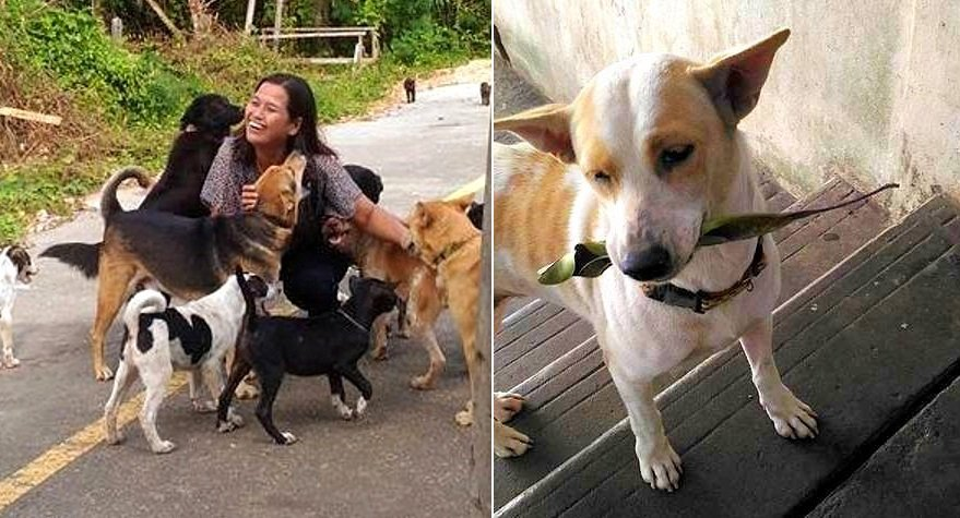 Бездомная собака приносит подарке женщине, которая его кормит. Очень милое зрелище!
