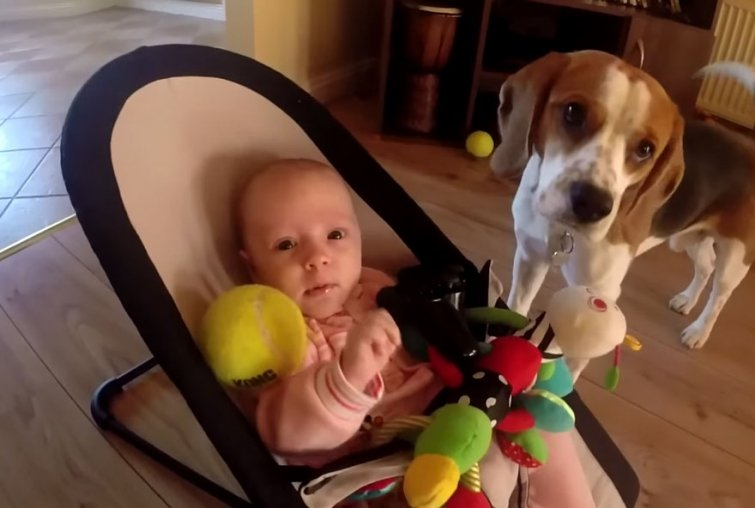 Собака довела ребенка до слёз. Взгляните, КАК она извиняется перед малышом!