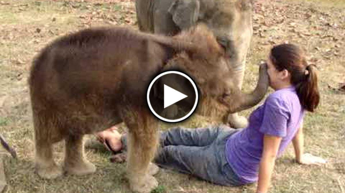 Маленький слонёнок пытается найти у девушки хобот. Очень милое зрелище!