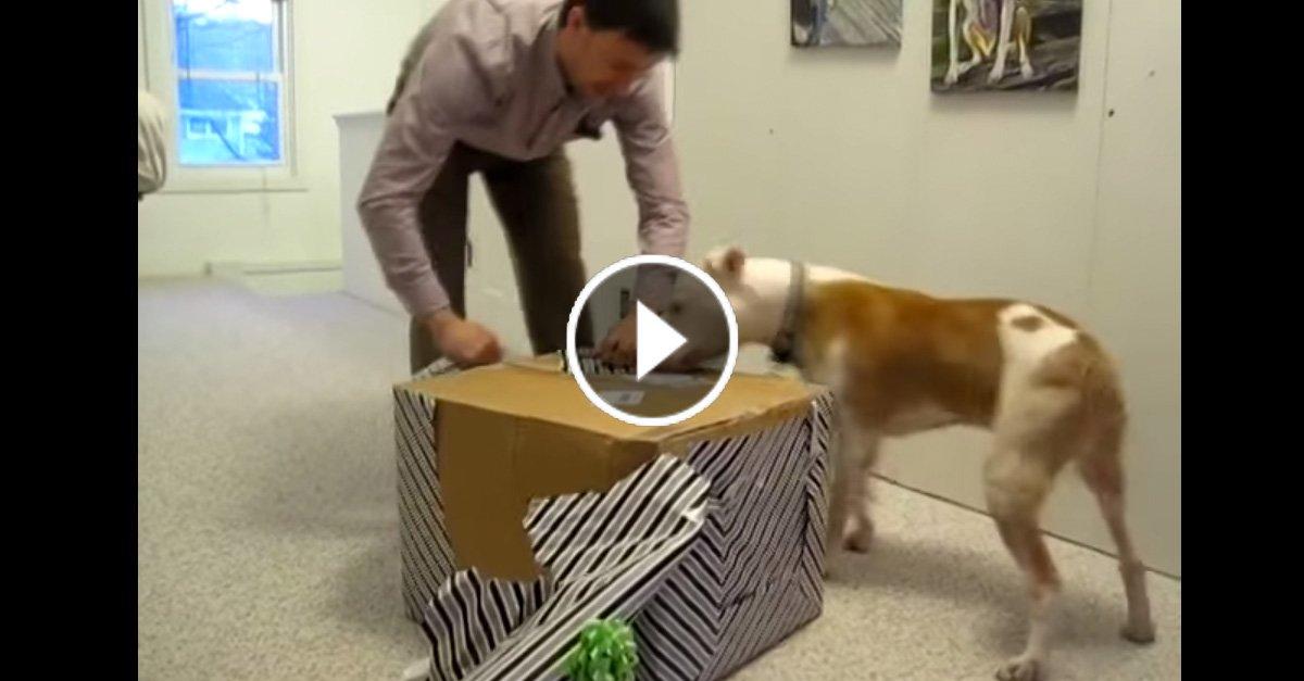 Этот пёс прошёл 7 месяцев химиотерапии. На свой день рождения он получает сказочный подарок! Его реакция бесподобна!