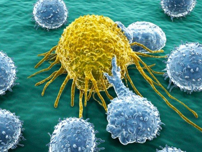 В борьбе с раком произведен прорыв