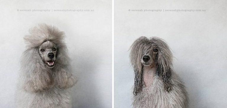 Наэлектризованная собака! У вас лопнут животы от смеха, когда вы увидите этого пса после душа