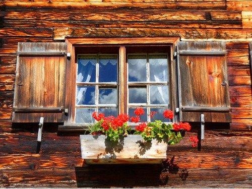 Герань в доме: приметы и магические свойства растения