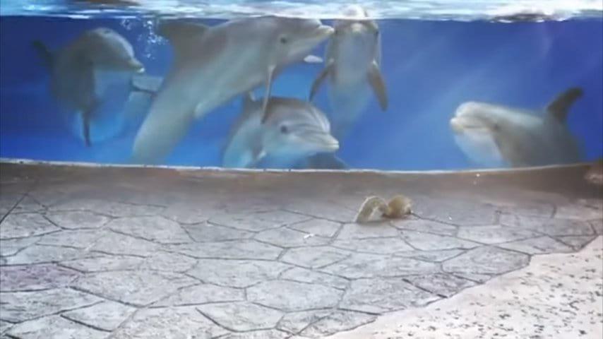 Курьез в зоопарке! Дельфины впервые встретились с белками. Только посмотрите на реакцию животных!