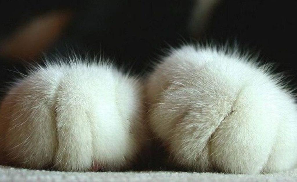 Ученые объясняли, почему кошка топчет вас лапками. А вы думали она вам массаж делает?