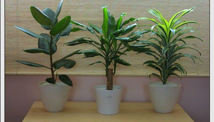 5 полезных растений для Вашего дома