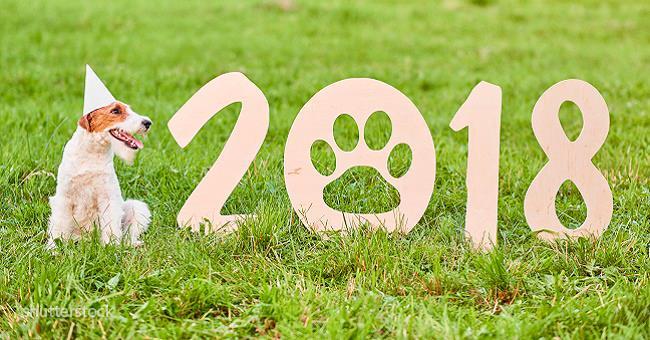 Гороскоп на 2018 год: что принесет на хвосте Желтая Собака
