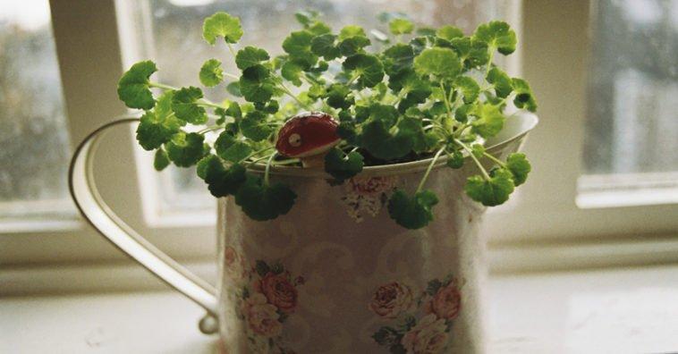 Отличный способ реанимировать ваше комнатное растение