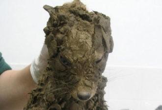 Они думали, что спасли маленькую собачку! Но вы не поверите, что они увидели, отмыв ЕГО!