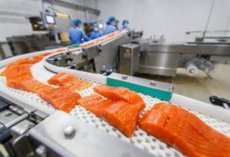 Токсиколог: Норвежский лосось — самая токсичная еда во всём мире