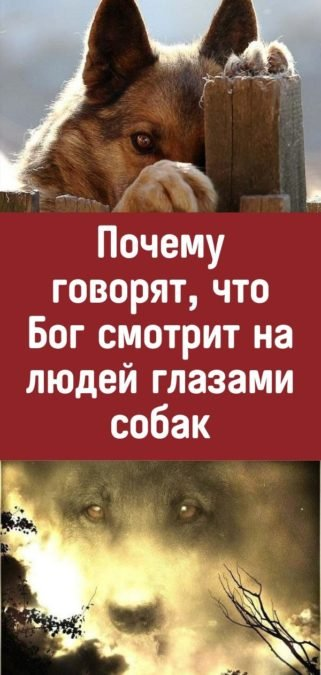 Почему говорят, что Бог смотрит на людей глазами собак