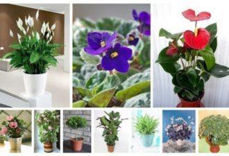 10 растений, которые принесут в ваш дом счастье и любовь