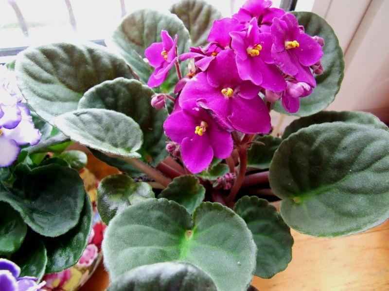10 уникальных растений, которые принесут в ваш дом счастье и любовь. Уже завели?