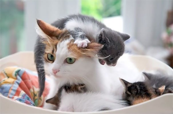 19 физиономий животных, показывающих, что значит быть мамой. Не только людям тяжело!