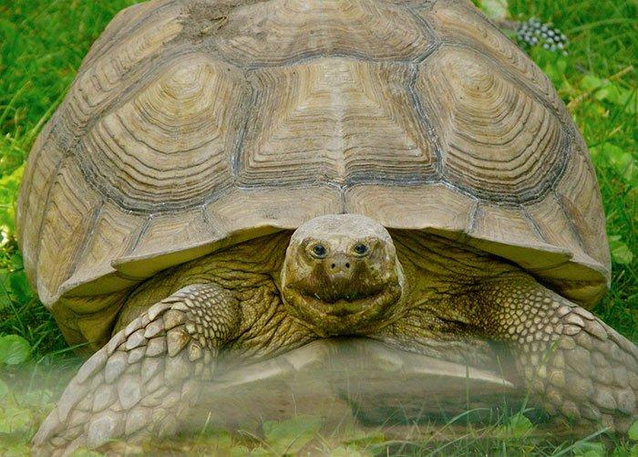 Как бы выглядели животные, если бы их глаза находились спереди. Это умора)))
