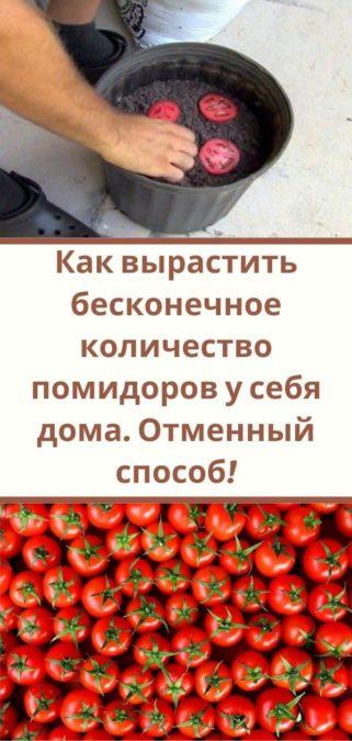 Как вырастить бесконечное количество помидоров у себя дома. Отменный способ!