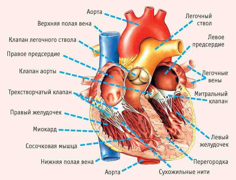 Если у вас серьёзные проблемы с сердцем, на это укажут эти 11 симптомов