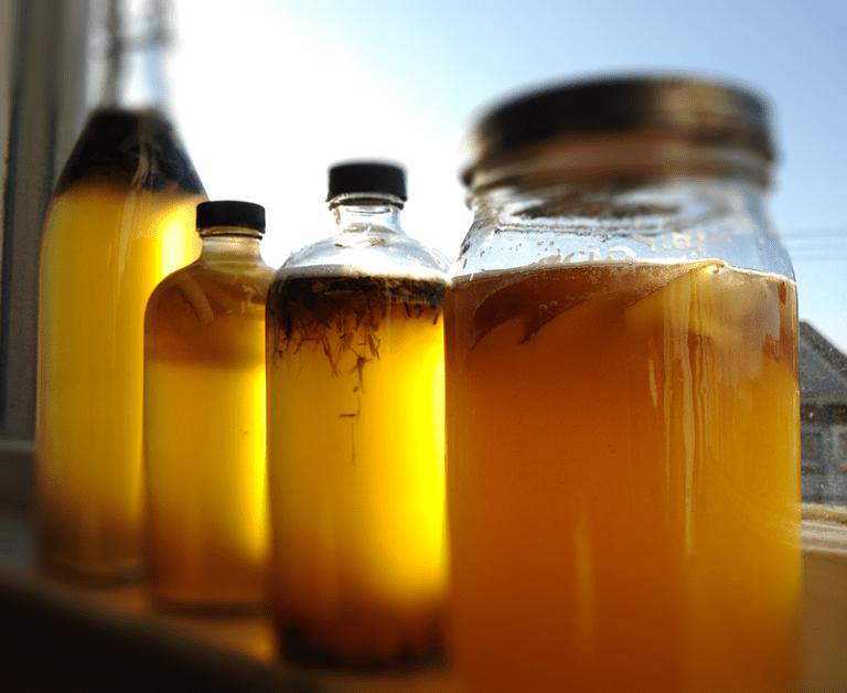 Вкусно и полезно! 3 удивительных преимущества чайного гриба для здоровья!