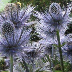 16 растений, защищающих от нечистой силы и негатива