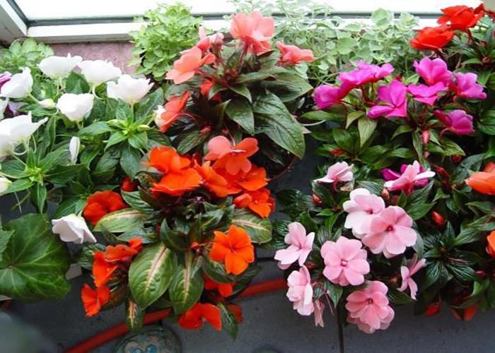 Чтобы комнатные растения цвели часто и подолгу - средства для каждого цветка