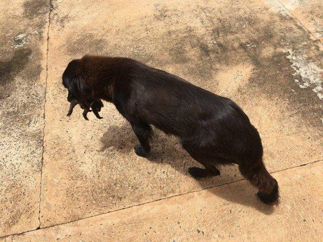 Собака рылась в мусорке не просто так… Она спасала малыша!