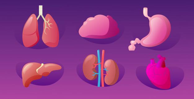 Оздоровите ваши почки, поджелудочную железу, печень и не только с 1 ингредиентом!