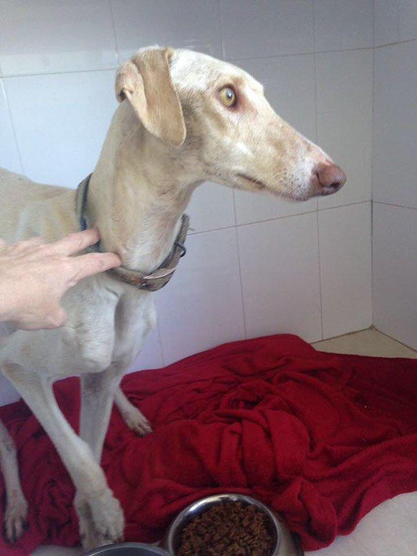 Собака со сломанными лапами привела ветеринара к своим щенкам!