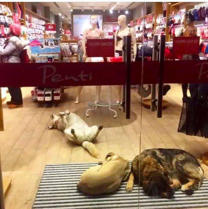 Жители Стамбула показали свою человечность, позаботившись о животных в метель