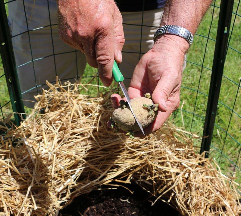 Интересный метод выращивания нескончаемого запаса картошки прямо у Вас дома! Проще некуда!