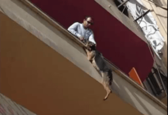 Овчарка спасла себе жизнь, выбросившись с балкона: леденящая душу история