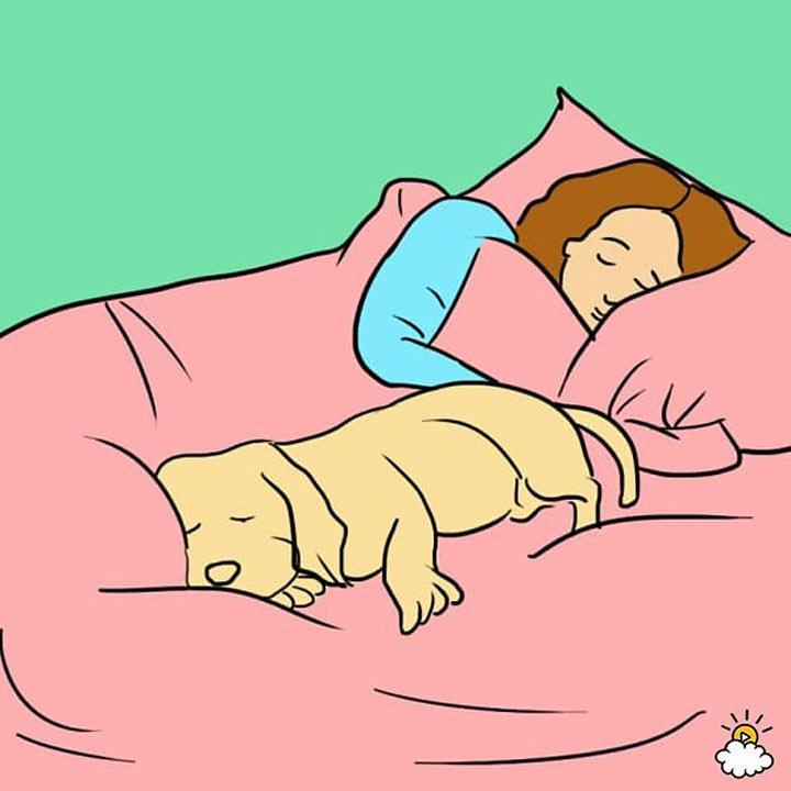 7 Неожиданных Причин, Почему Ваша Собака Должна Спать С Вами В Кровати