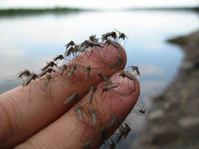 Мощное и ОЧЕНЬ простое в приготовлении средство от комаров