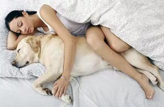 7 Неожиданных Причин, Почему Ваша Собака Должна Спать В Вашей Кровати