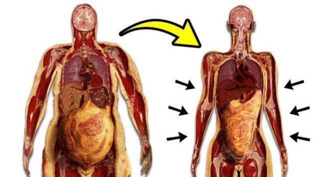 Начните терять вес уже сегодня вечером... Избавляемся от висцерального жира...