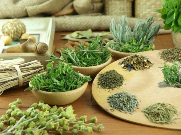 Лекарственные растения для улучшения мозгового кровообращения. Поддержите ваш мозг!