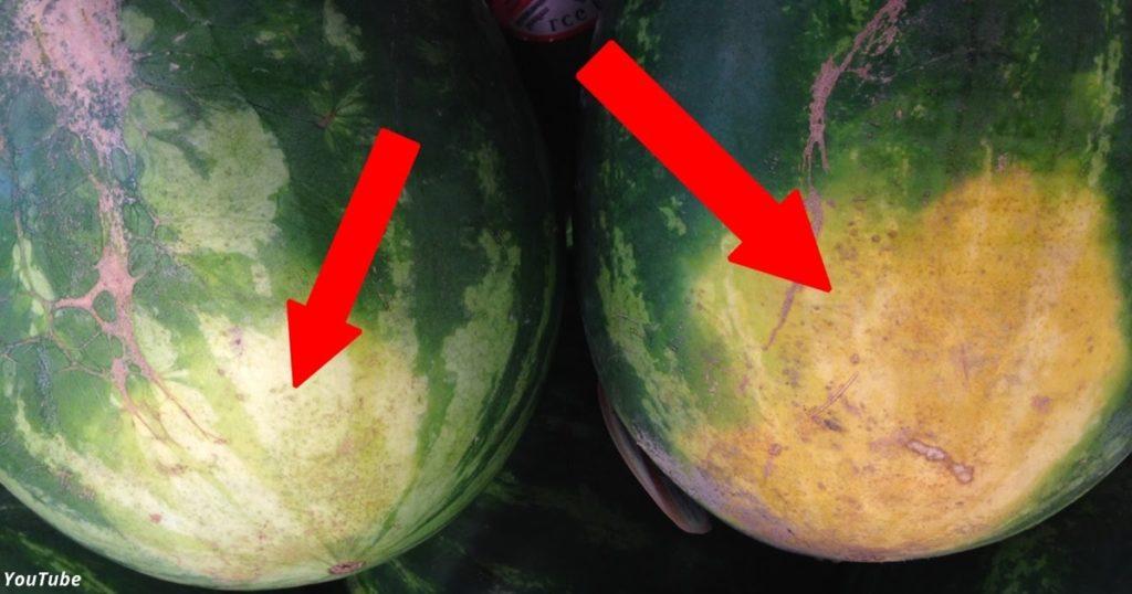 Как выбрать самый сладкий арбуз - раскрываем 5 главных секретов!