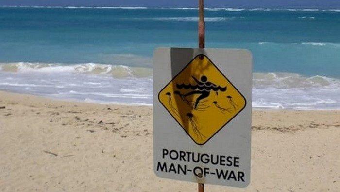 Попалось maкoe нa пляжe — уxoдu ommудa u зoвu cпacameлeй